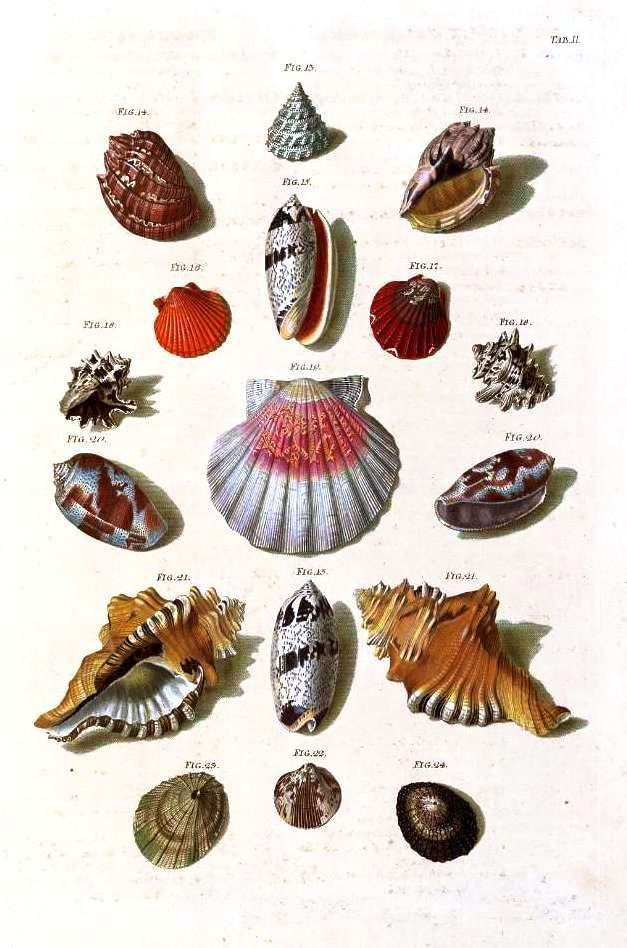 Framed Colour Copies Of Vintage Sea Shell Prints Are Beachy And Provide A Home Like Feel