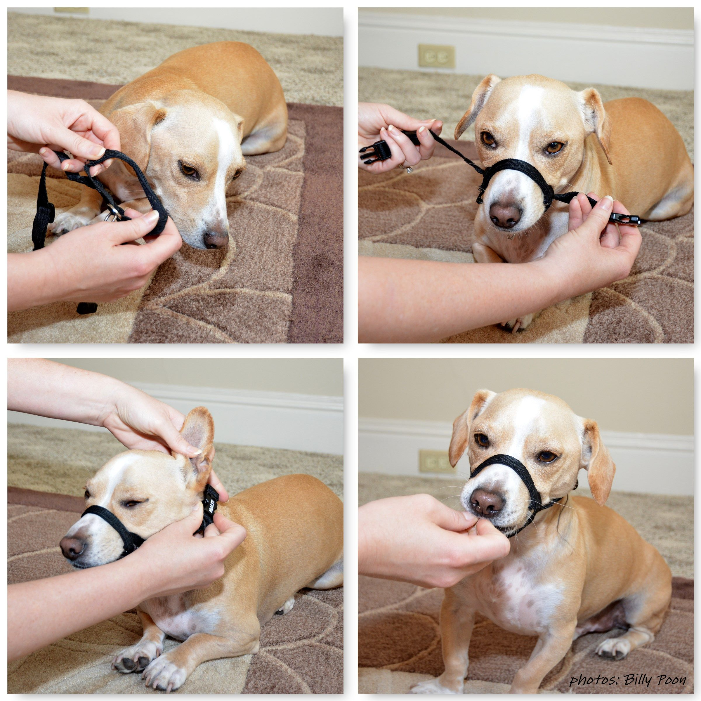 The 6 Most Popular Dog Collars and How to Use Them
