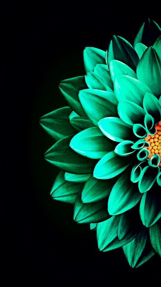 Pin By Maine 1014 On Just Me Flower Wallpaper Iphone Wallpaper