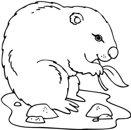 Groundhog Coloring Pictures | Other crafts | Pinterest