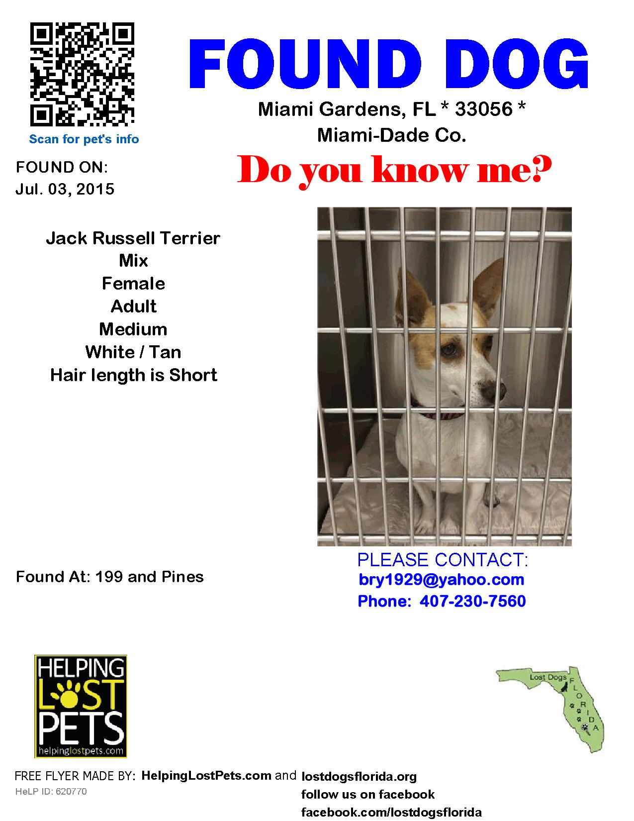 Found Dog Jack Russell Terrier Miami Gardens Fl United