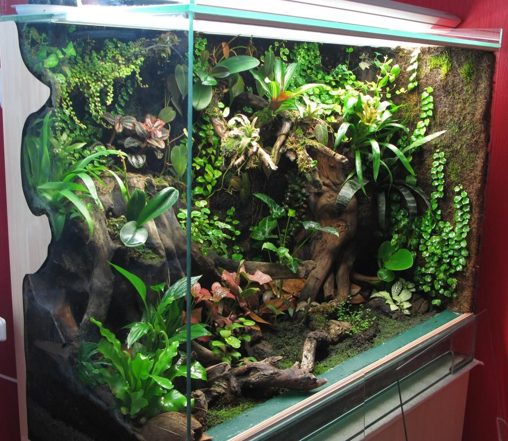 Изображение animal enclosures pinterest vivarium crested