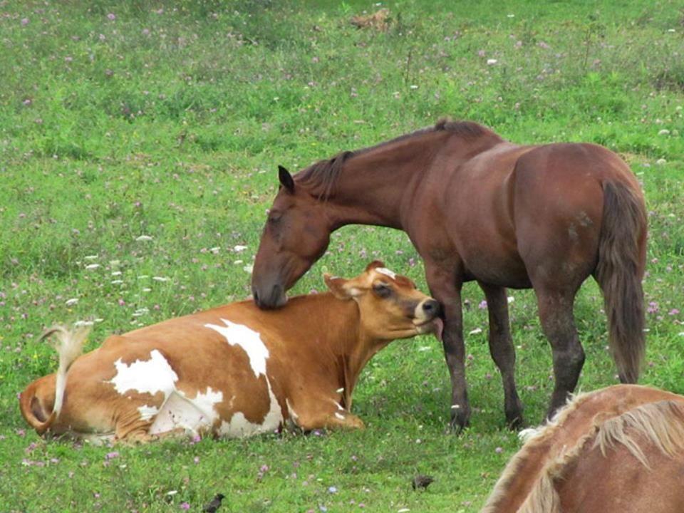 showgirlglitz horse/cow love