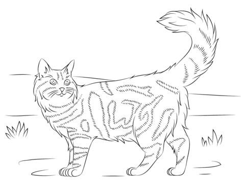 Calico Cat Coloring Page