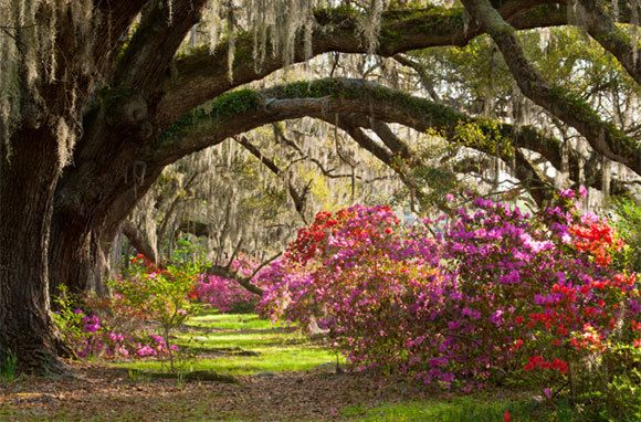 5a235a300bc8d95493802fcf48fe4363 - Magnolia Plantation & Gardens 3550 Ashley River Road Charleston Sc