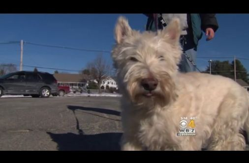 Dog Rescued After Canine Companion Alerts Officer Of Her Whereabouts