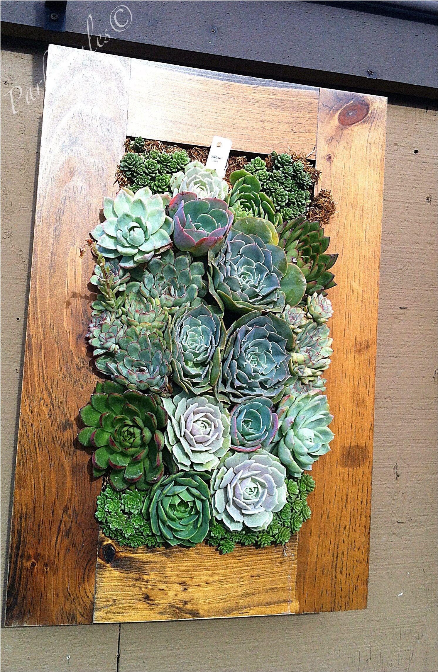 Succulent Wall Frame Rogers Gardens Corona Del Mar Ca Succulent