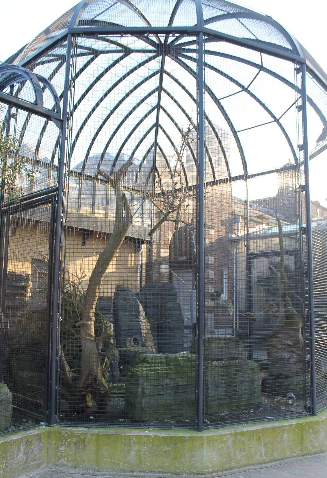 Outdoor Aviary Kea Zoochat Bird Aviary Aviary Pet Bird Cage