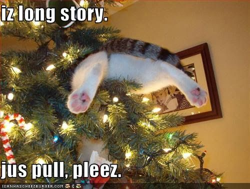 An this explains why I don't put up a Christmas Tree.