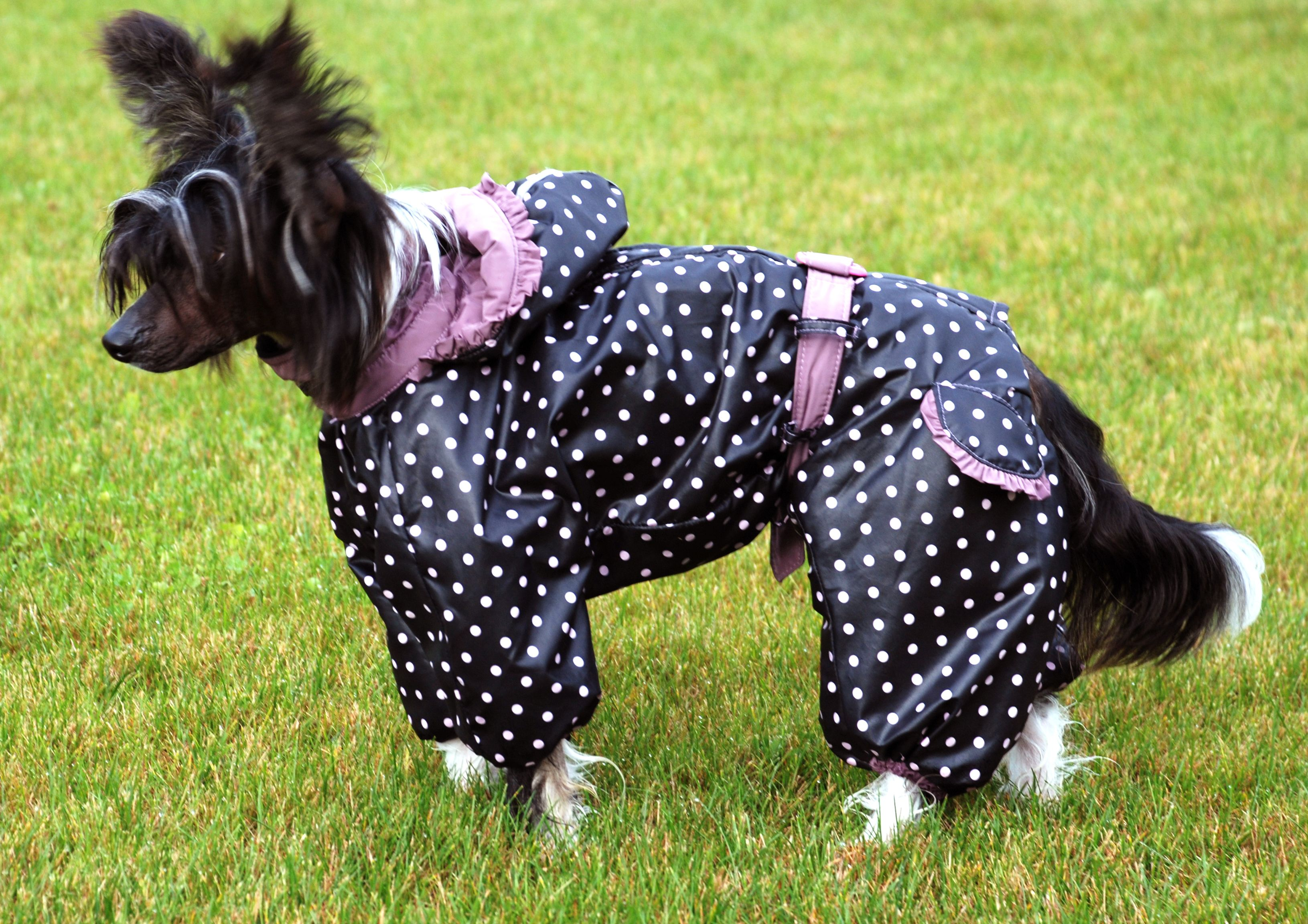 quality enjoy lowest price separation shoes Awesome Custom Made Chinese Crested Raincoat Overall ...