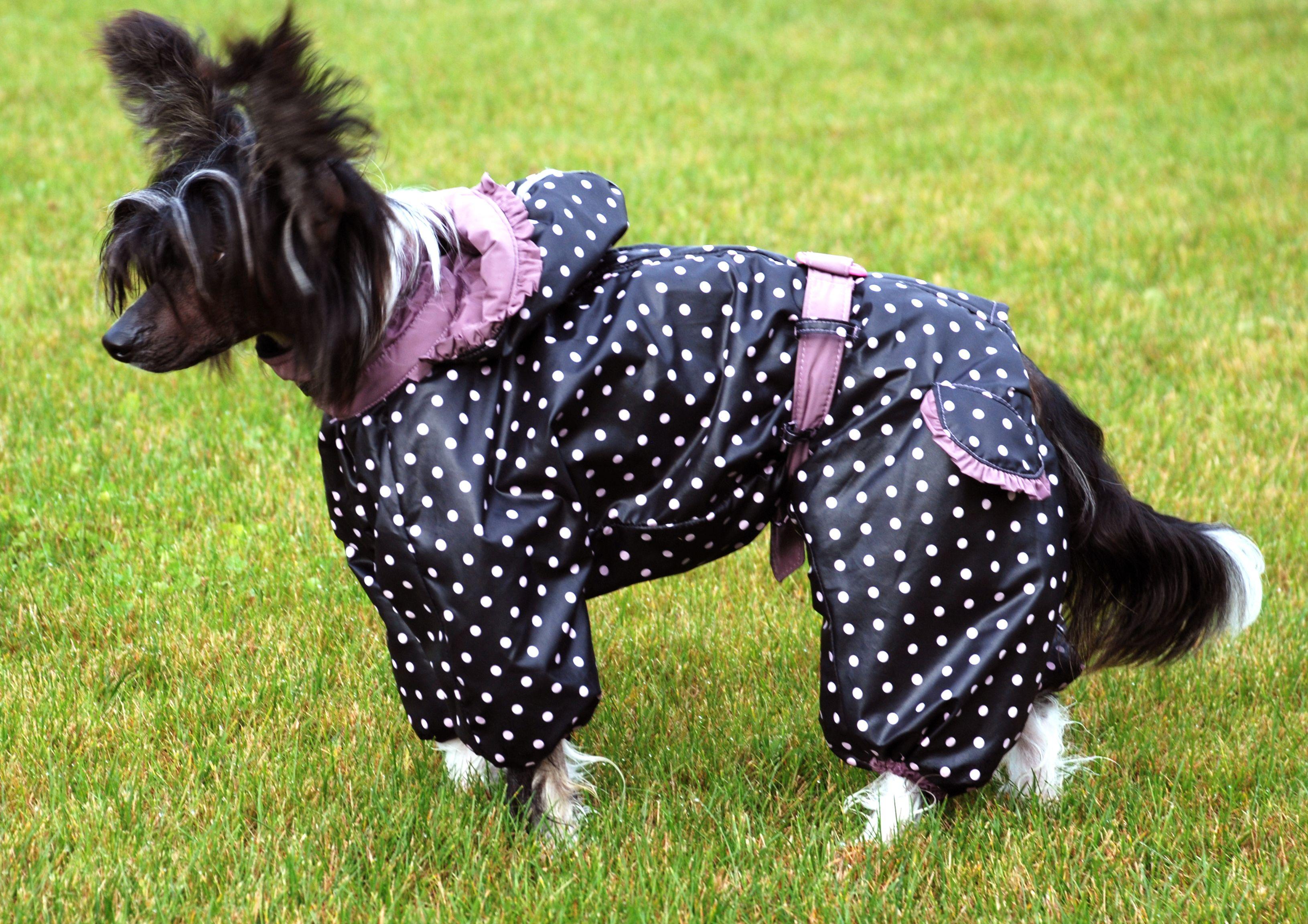Chinese Crested Raincoat