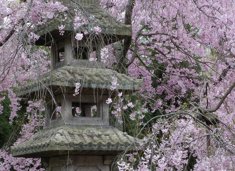 The Best Time To Visit Japan A Month By Month Guide Flower Festival Cherry Blossom Tree Japanese Incense