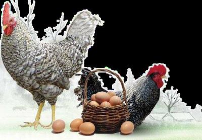 Ruyada Yumurta Gormek Yumurta Ruya