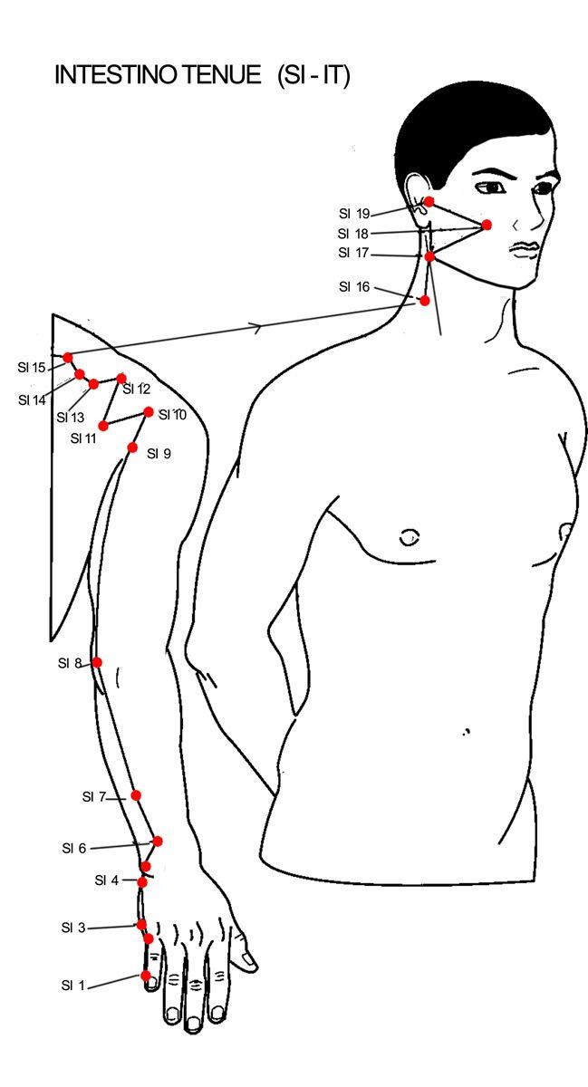 Si 3 Intestino Tenue Accanto All Articolazione Metacarpo Falangea Del Quinto Dito Della Mano Miorilassante Antido Nel 2020 Yoga Facciale Agopuntura Esercizi Di Yoga