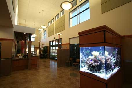 I want to have fish tanks in the reception area as well!
