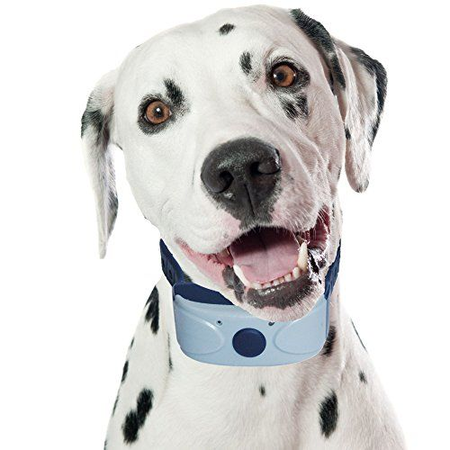 Reviews Best Dog Barking Collar Uk