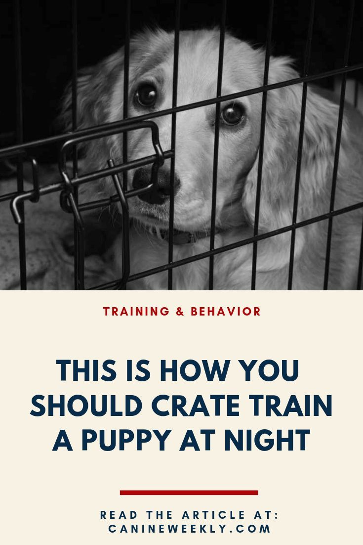 How To Crate Train A Puppy At Night Dog Training Dog Training