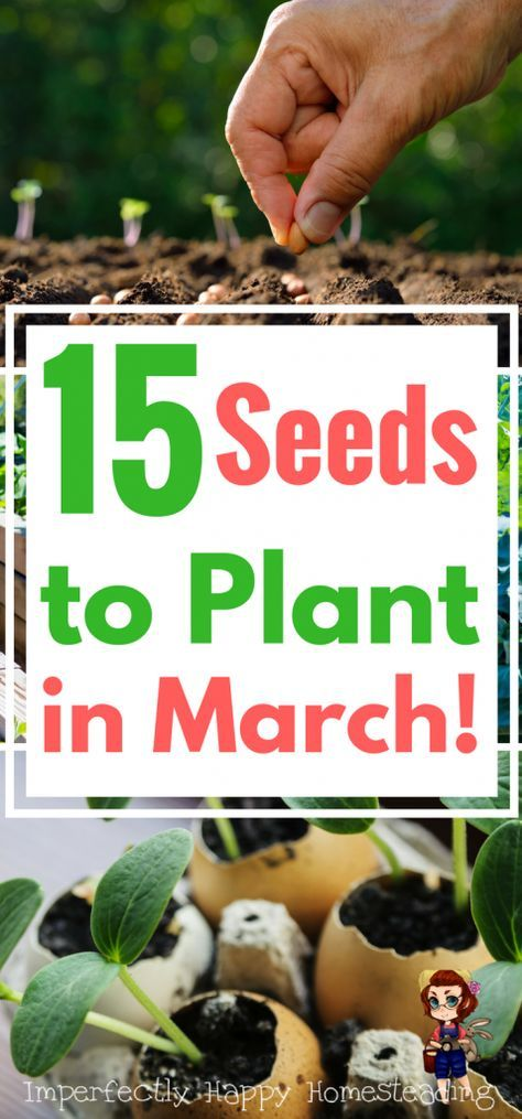 What To Plant In March Seeds And Transplants For Spring Gardens Vegetable Garden Planner Indoor Vegetable Gardening Vertical Vegetable Gardens