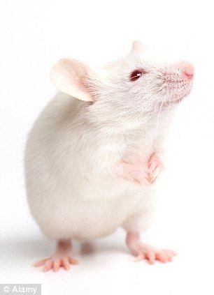 scientists map visual neurons from a mouse and a fruit fly giving