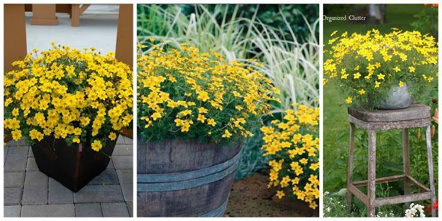 Jakie Kwiaty Posadzic W Maju By Kwitly Do Poznej Jesieni Czyli Kwiaty Na Balkon I Taras Najdluzej Kwitnace D Plants Decor