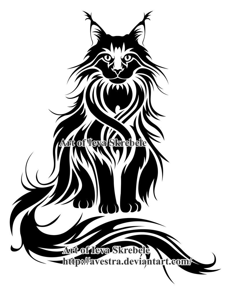 6792e061851d8 full main coon for tattoo | Sketches | Cat tattoo, Maine coon cats ...
