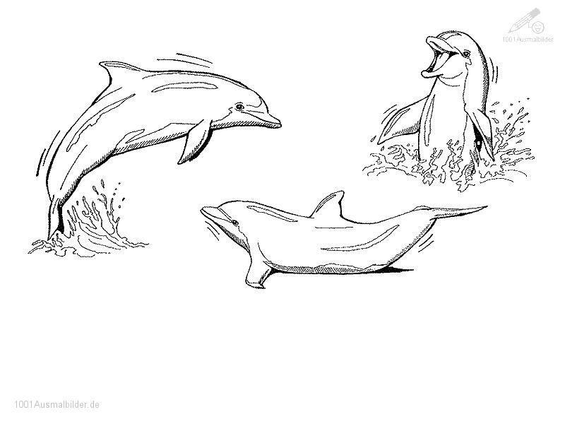 Delphin Ausmalbild Tattoos Malvorlagen Tiere Zeichnen Zeichenvorlagen