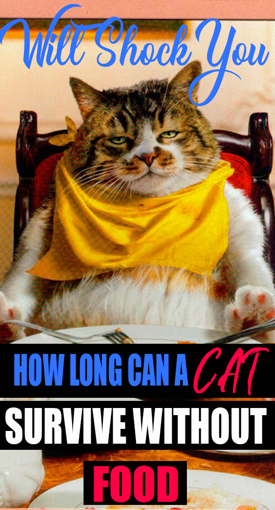 How long can a cat survive without food in 2020 Cats