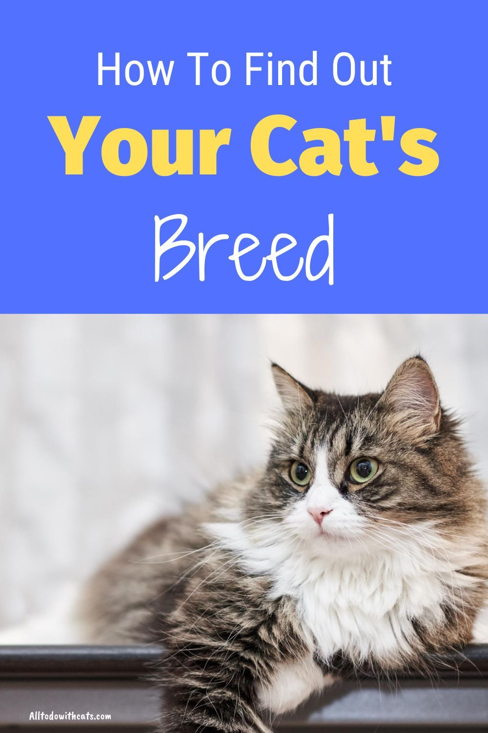 What Breed Is My Cat Find Out What Type Of Cat You Have In 2020 Cat Breeds Cats Cat Questions
