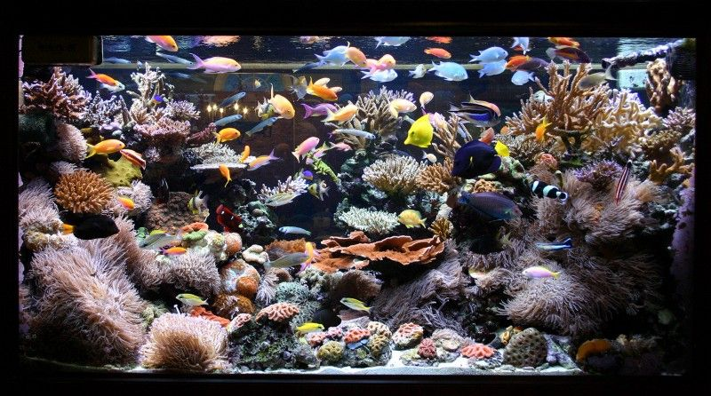 Welcome To Saltwater Aquarium Nyc Saltwater Aquarium And