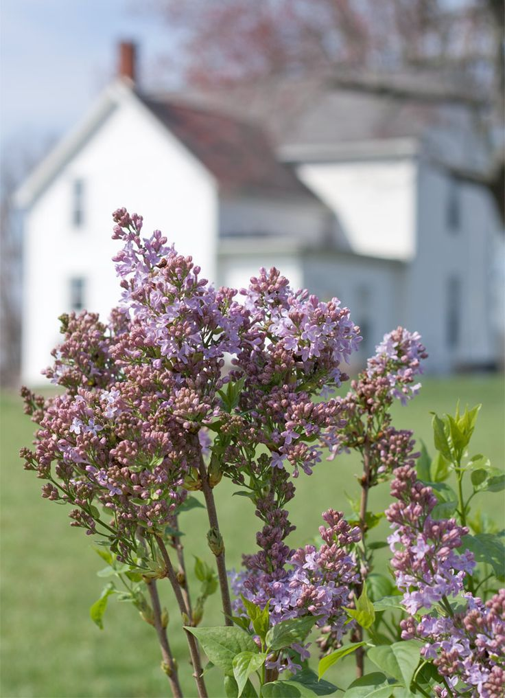 9 Must-Have Plants for a Farmhouse Flower Garden