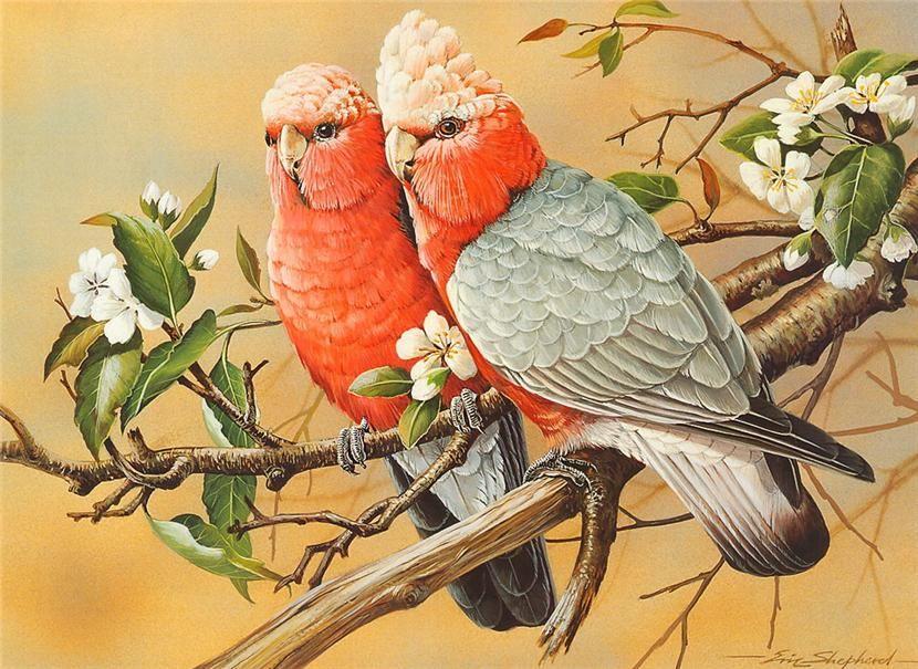 Premise Indicator Words: Realistic Australian Bird Art