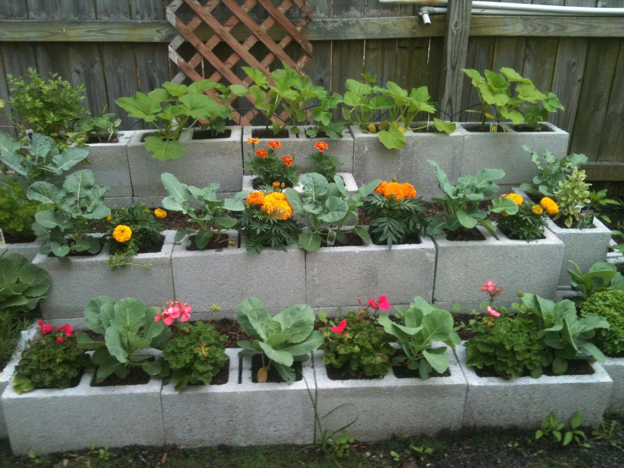 cinder block flower bed by Cindy E. | Growing herbs ... |Cinder Block Flower Bed Plans