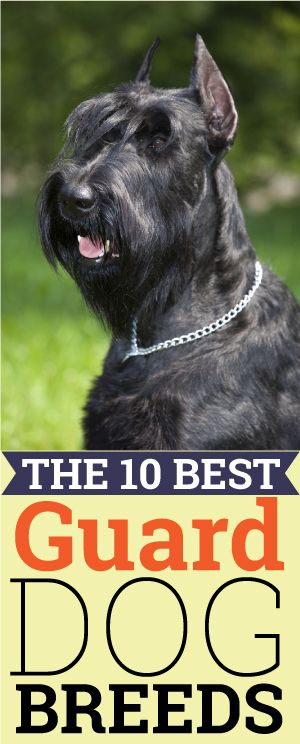 Http Iheartdogs Com The  Least Obedient Dog Breeds