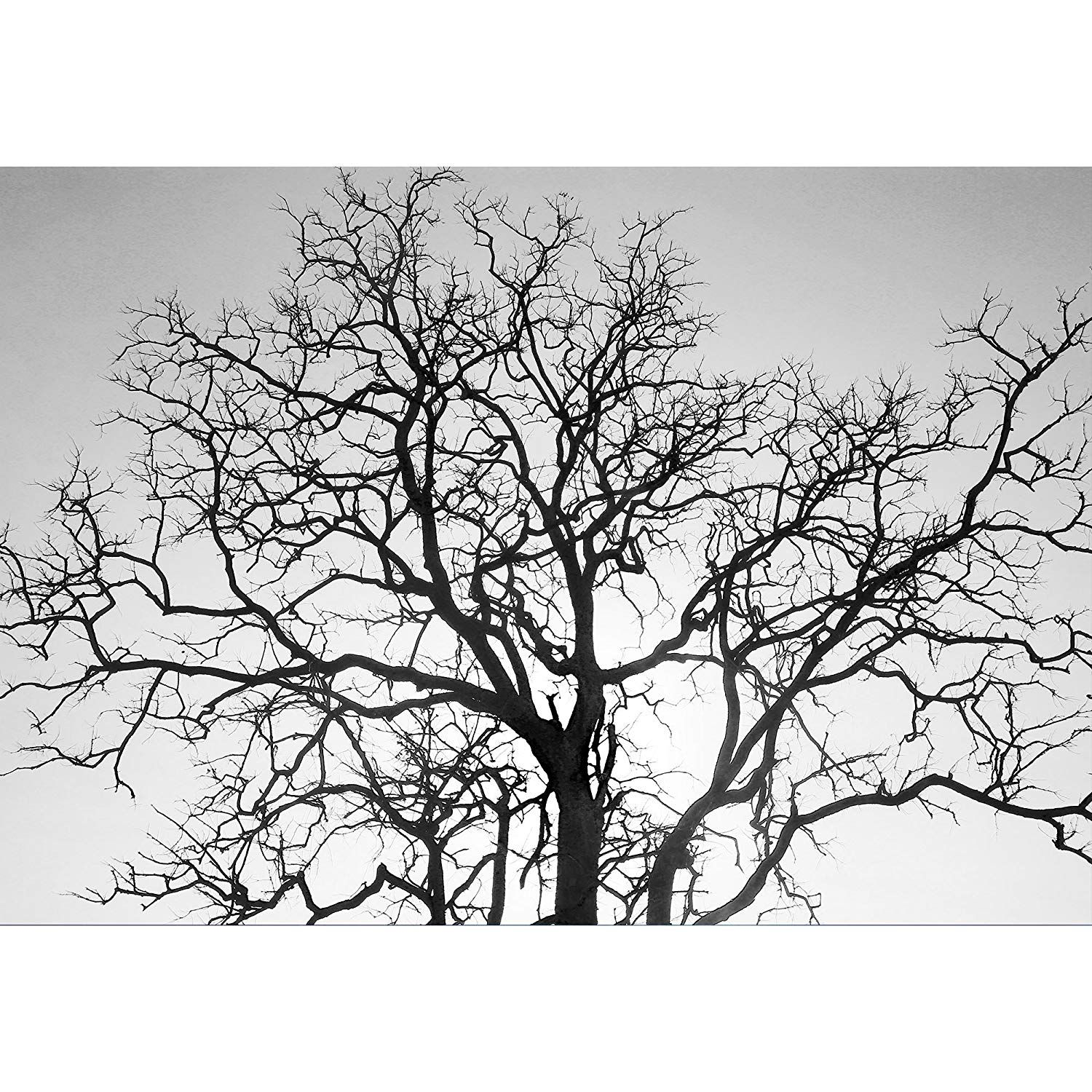 Dead Tree Branch Black and White Tree branches