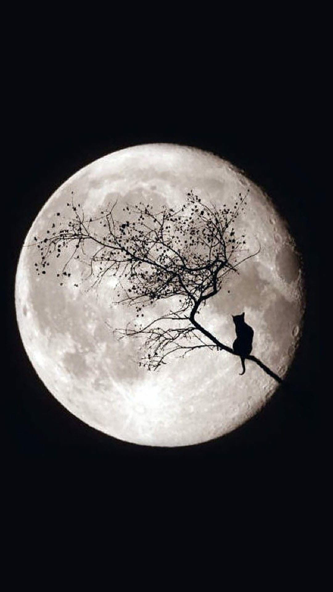 Pin by Cher Messercola on Halloween Halloween moon