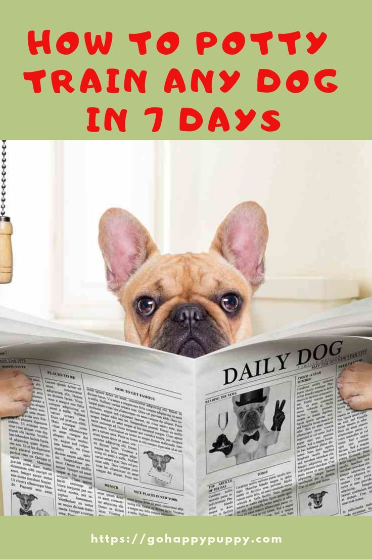 How To Potty Train Any Dog In 7 Days 2019 House Train Any Dog