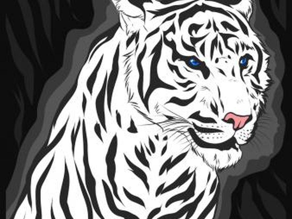 Dibuja un tigre realista paso a paso   Dibujar, Para empezar y Faciales