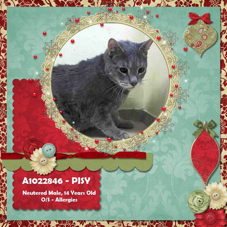 NYC **SeniorSweet & Social**TO BE DESTROYED 12/21/14