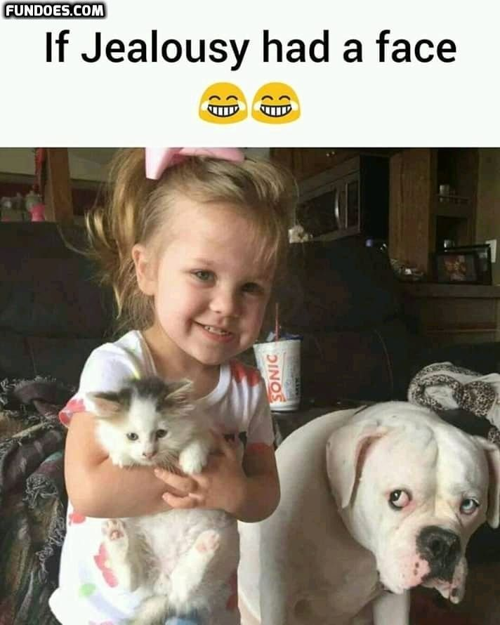 Kids Funny Memes In Www Fundoes Com To Make Laugh Funny Animal Memes Animal Memes Funny Pictures