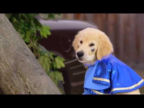 Disney Super Buddies Air Buddies Movies Buddy Movie Dog Trailer