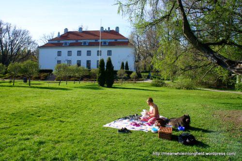 Piknik Auroran puistossa Espoossa