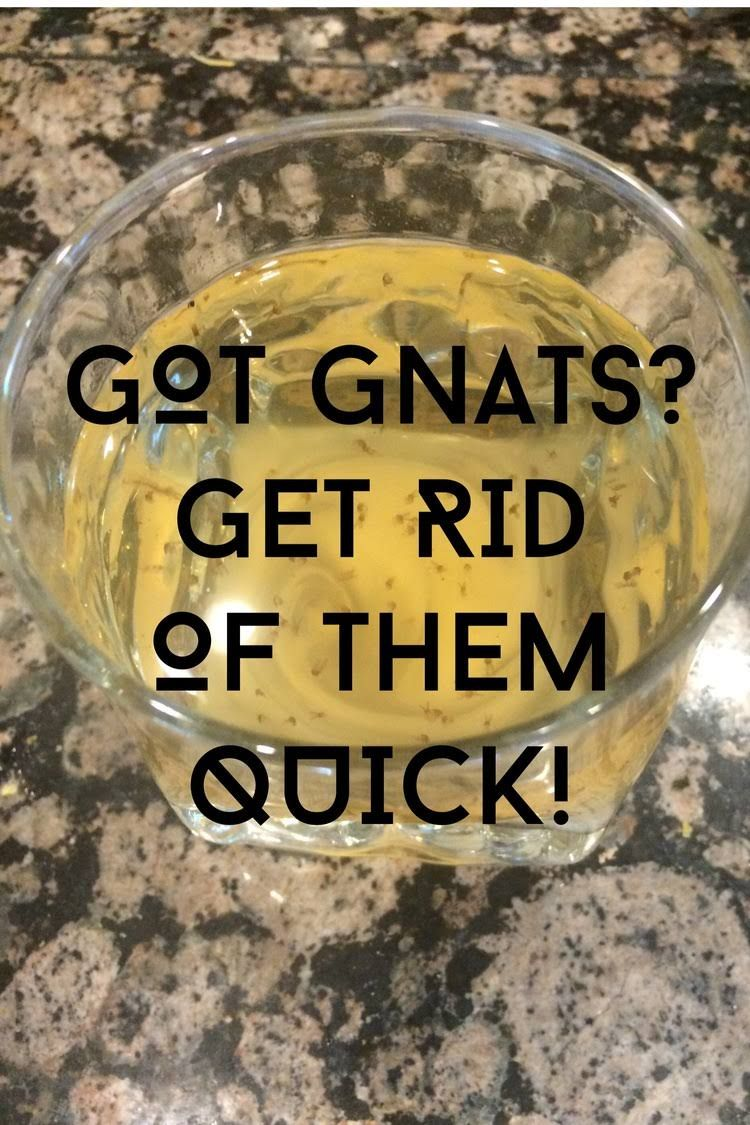 Got Gnats? Get Rid Of Them Fast!