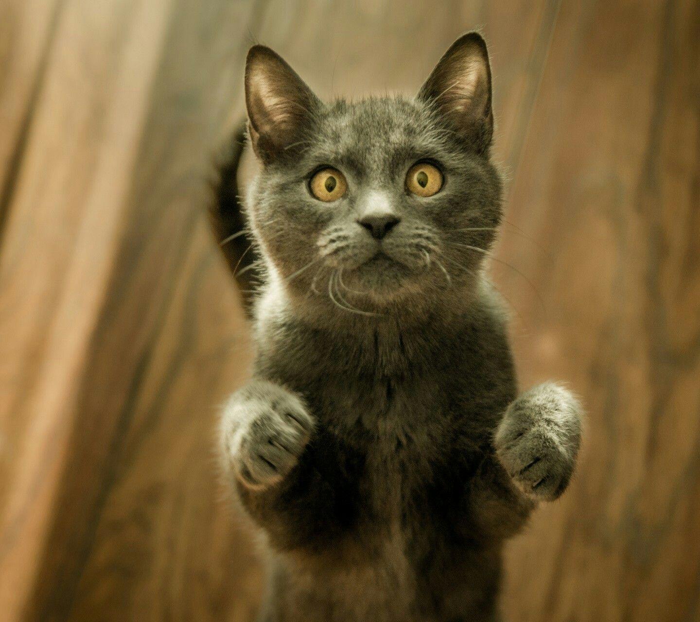 Such A Curious Inquisitive Little Face D Cat Care Cats Cat Behavior