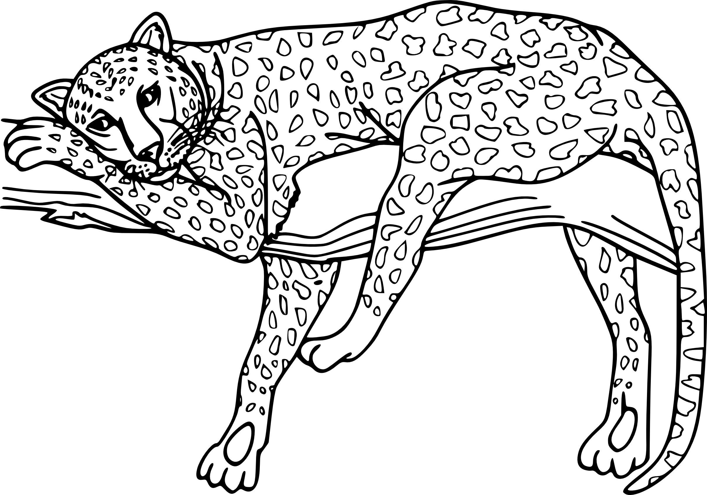 Dessin animaux tigre superbe photo coloriage guepard et dessin imprimer adult coloring pages - Image dessin tigre ...