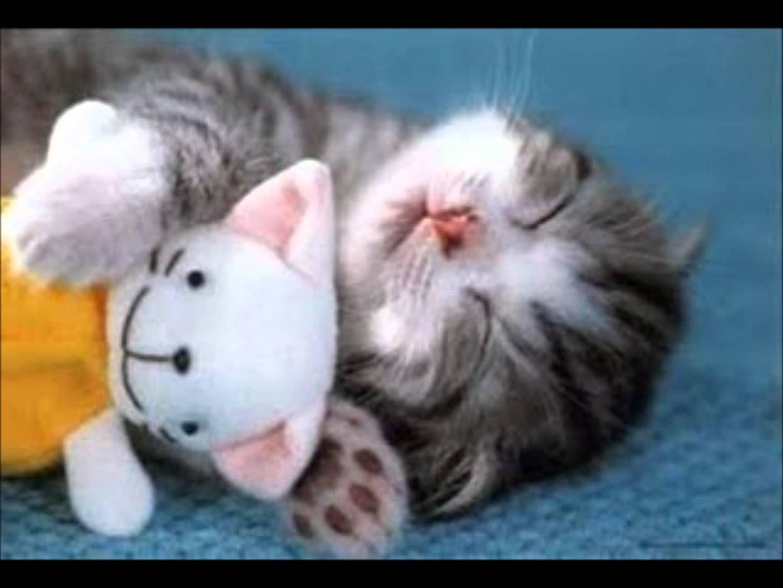 Cute Kitten Purring While Asleep With Teddy Bear Kittens Cutest Cute Animals Sleeping Animals