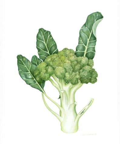 has been celebrated for years for its high contents of Vitamins A and C, but recent studies have demonstrated that broccoli's nutritional profile is much more impressive. It contains phyto-nutrients that boast stellar cancer fighting abilities as well as reduce inflammation levels and support eye health.