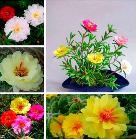 семена цветов в огороде