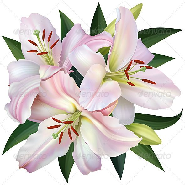 White Lily | Natural, Summer and Pink