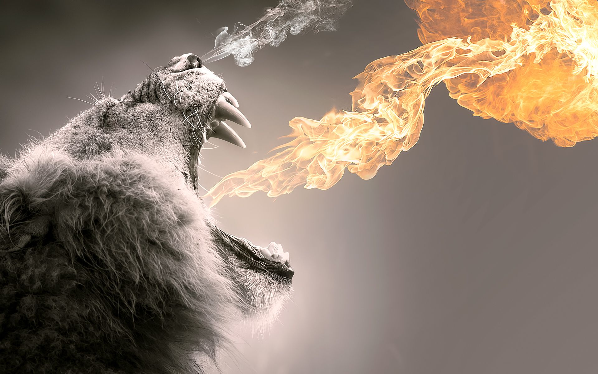 roaring flames wide cool wallpapers download Lion