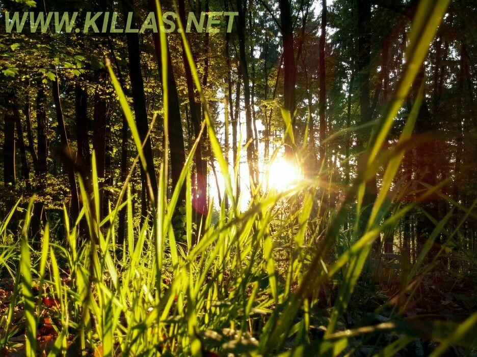 Abendrunde im Stadtwald. #Iserlohn #Stadtwald #Sonnenuntergang #Sauerland
